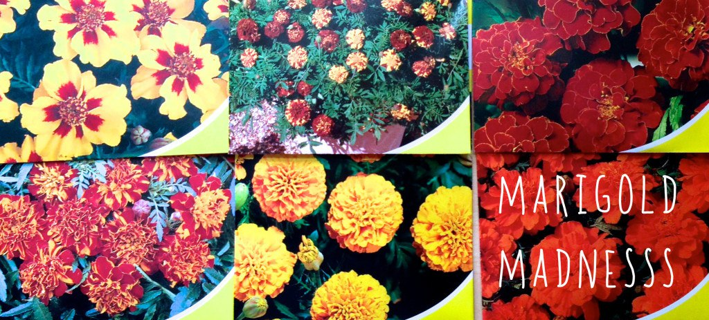 Marigolds are edible flowers