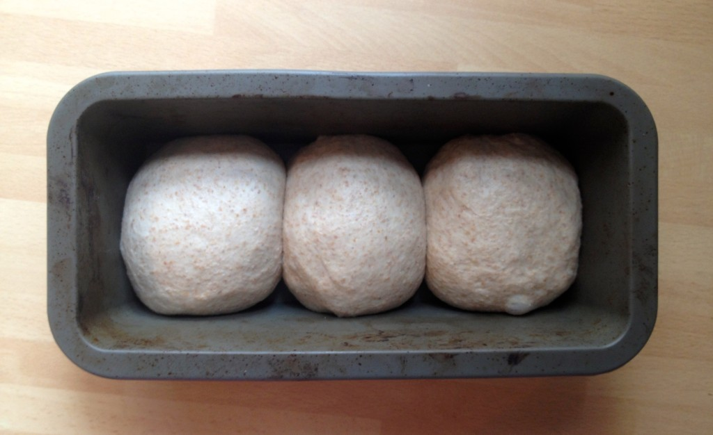 wholemeal english muffins recipie