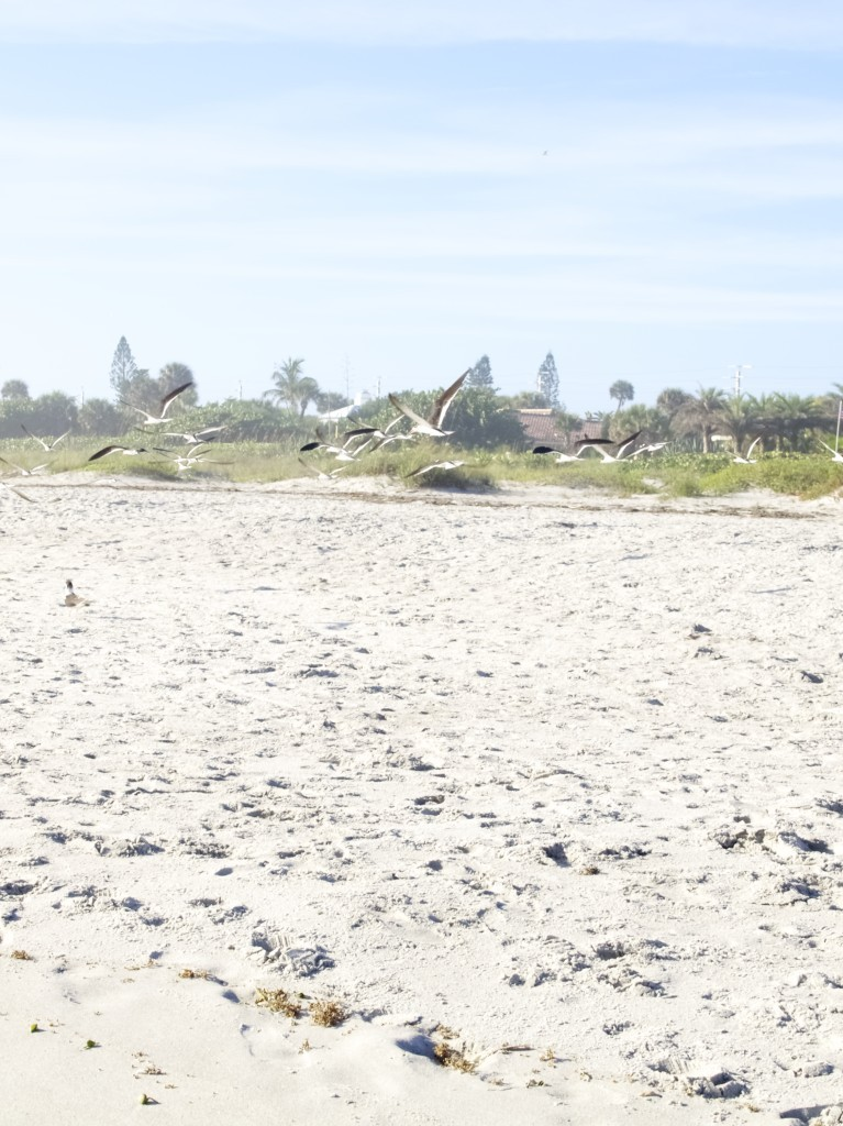 Cocoa Beach