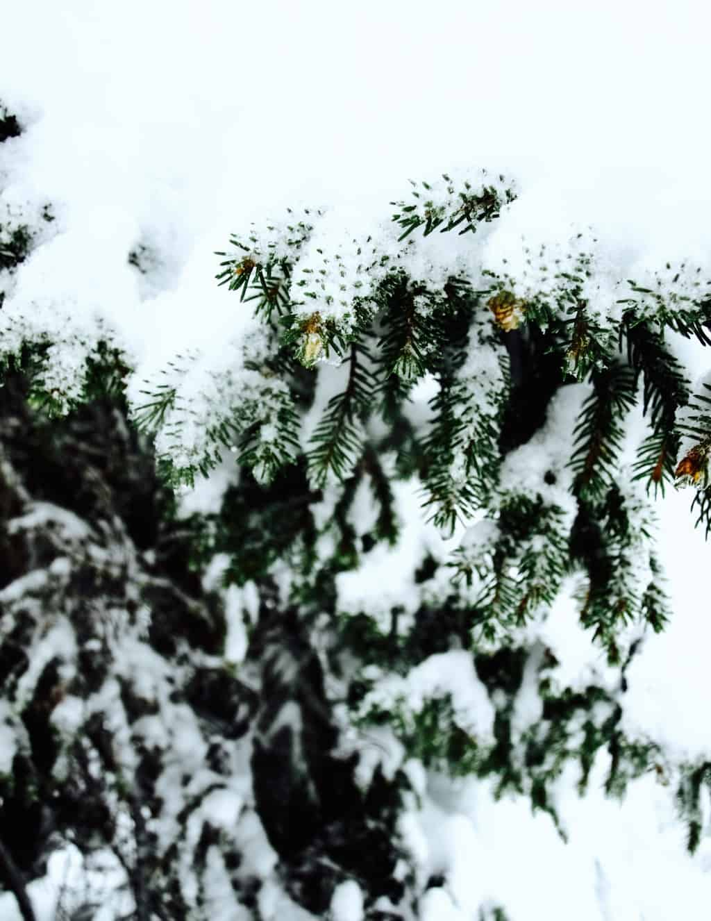 Forest in snow inspiration from our recent trip to Austrian Alps